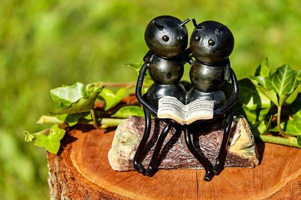 hormigas apareamiento