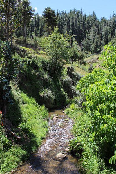 Granja Porcón (Cajamarca, Perú)